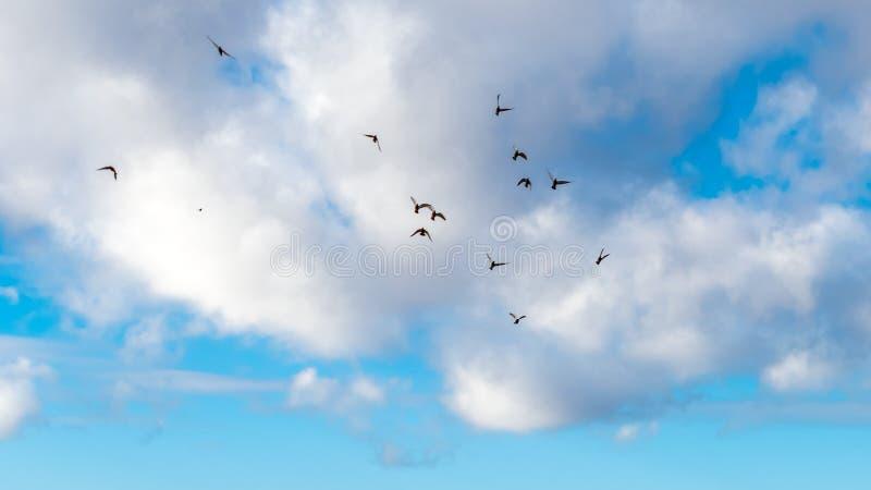 Uno stormo degli uccelli in cielo blu immagine stock libera da diritti