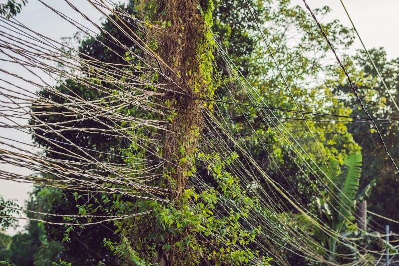 Unordentliche Drähte befestigt zum elektrischen Pfosten, zum Chaos von Kabeln und zu den Drähten auf einem elektrischen Pfostenko stockbilder