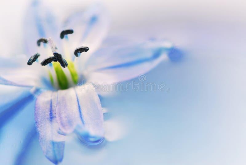 unosi się kwiaty fotografia royalty free