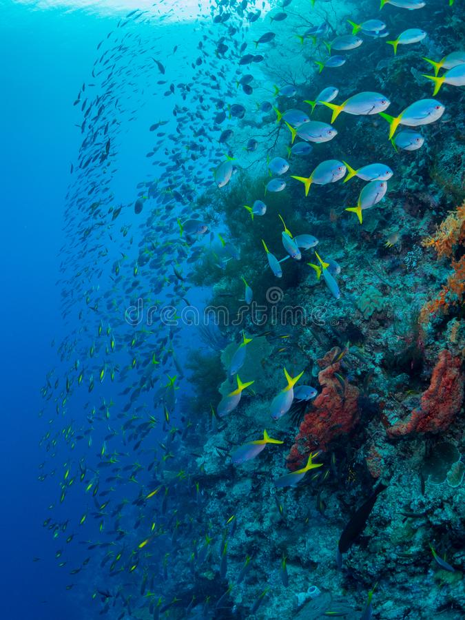 Unparalleled levels of marine diversity. Misool, Raja Ampat, Indonesia. The reefs in Misool Marine Protected Area within Raja Ampat, Indonesia, are the richest stock images