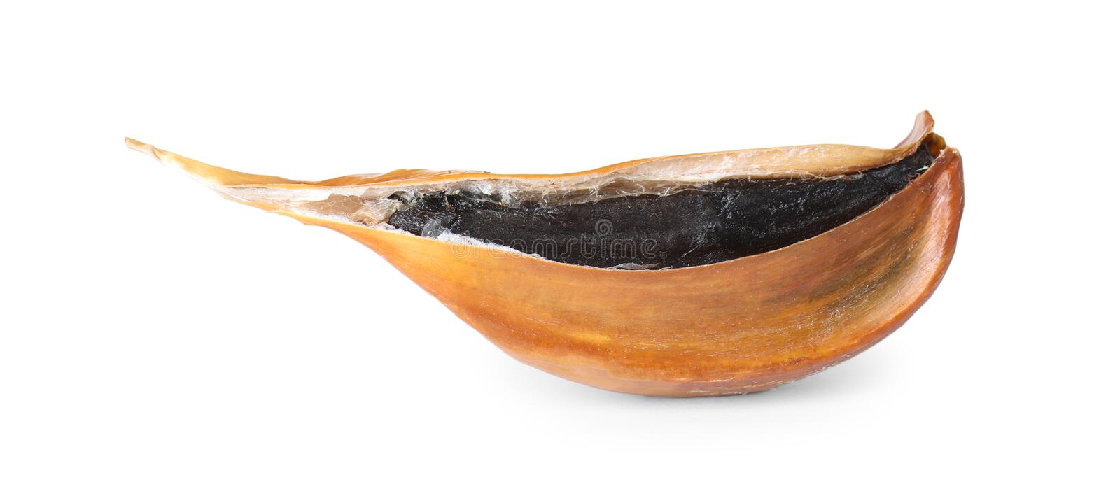 Unpeeled clove of aged black garlic on white stock images