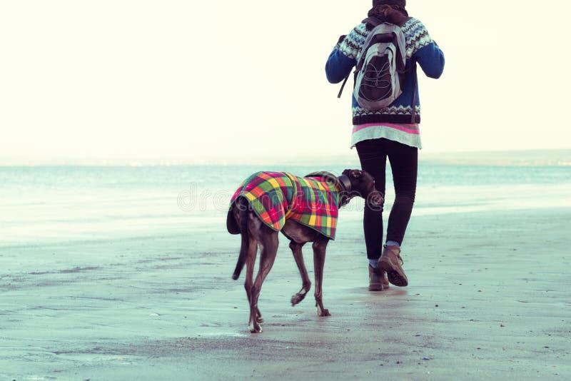 Unrecognisable gehendes Hippie-Mädchen ihr Hund, Windhund, auf dem Strand stockfotos