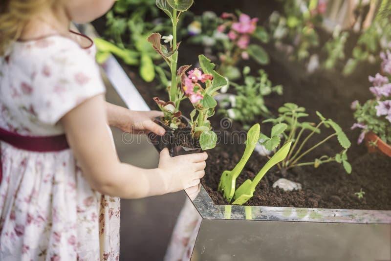 Unrecognizable śliczne małej dziewczynki mienia rozsady kwiaty w klingerycie puszkują, flancowanie wiosny kwiaty w ogródzie zdjęcia stock