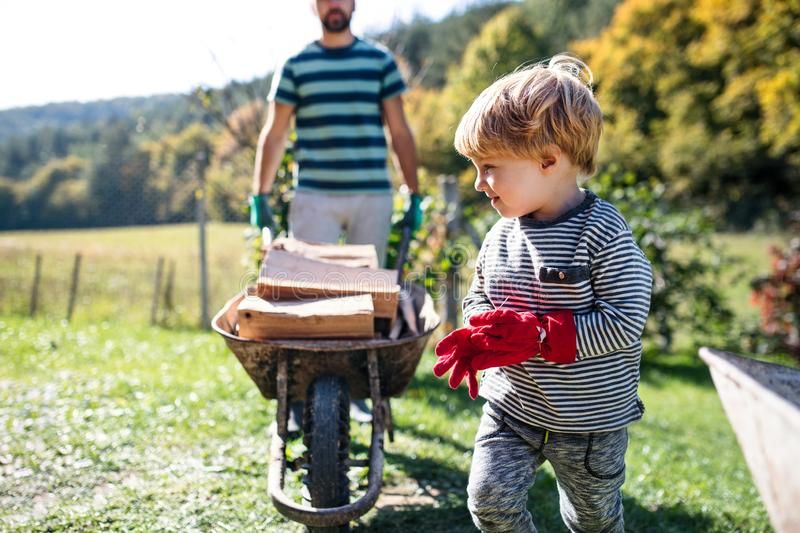 Unrecognizable father and toddler boy outdoors in summer, carrying firewood in wheelbarrow. royalty free stock photo