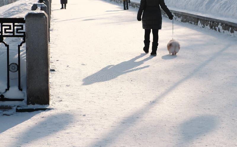 Unrecognizable kobiety odprowadzenie z psem na smyczu w śnieżystym zima parku troszkę widok z powrotem zdjęcie stock