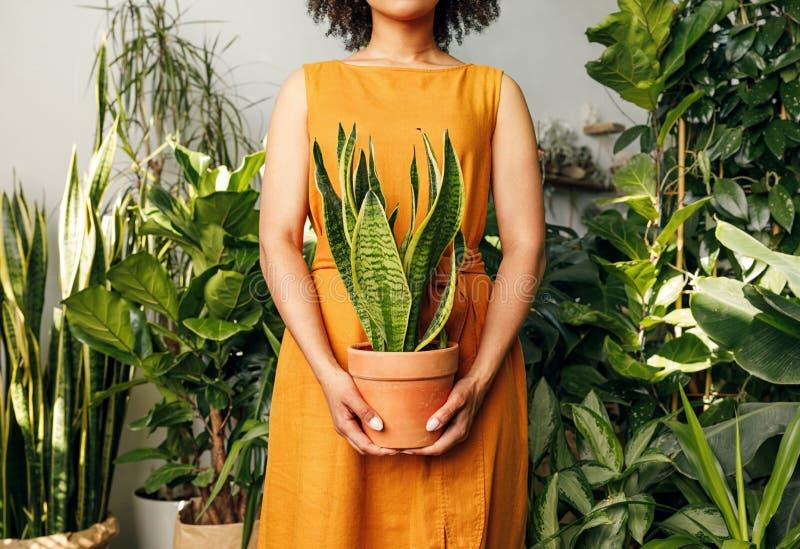 Unrecognizable kwiaciarni kobieta trzyma garnek obrazy stock