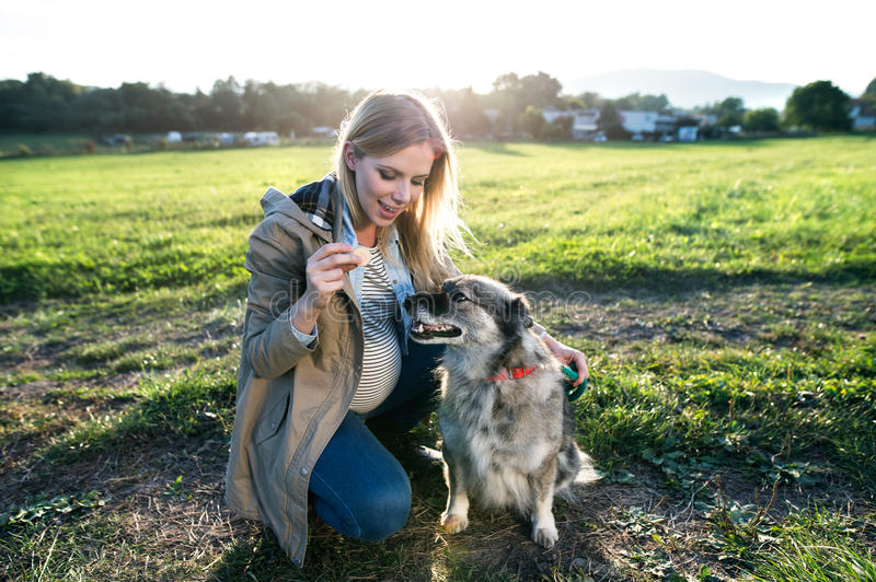 Unrecognizable pregnant woman with dog in green sunny nature royalty free stock photo