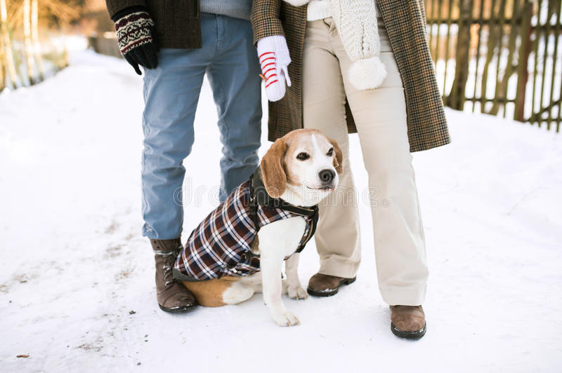 Unrecognizable senior couple outdoors with dog in winter nature. Unrecognizable senior women and men on a walk with their dog in sunny winter nature royalty free stock photos