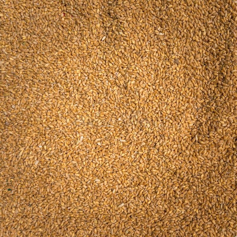 Unrefined ryż dla zdrowego zakończenia obraz royalty free