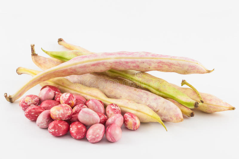 Unripe common beans Phaseolus vulgaris. Isolated in white background royalty free stock photo