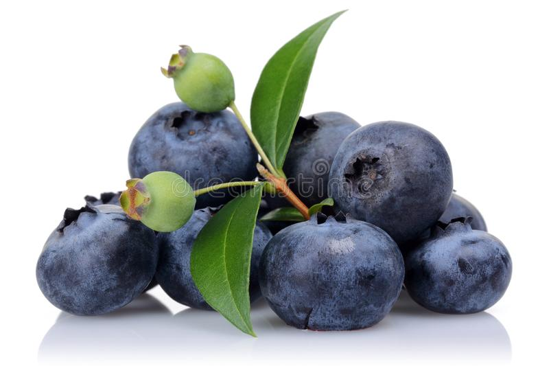 Unripe and ripe blueberries with leaves isolated stock image