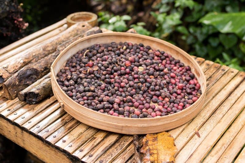 Unroasted органические кофейные зерна arabica Тропический экзотический остров Бали, Индонезия Подлинный кофе Бали на кофе стоковое фото rf