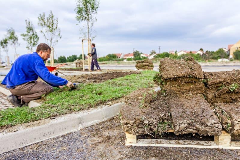Unrolling trawa, stosuje muraw rolki dla nowego gazonu obraz stock