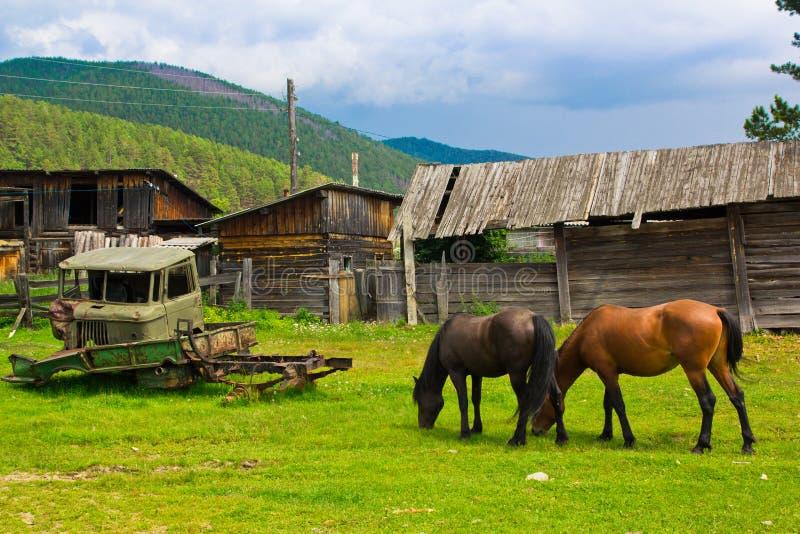 Uns cavalos vermelhos e pretos pastam em um prado verde ao lado das casas de madeira arruinadas velhas e de um carro quebrado fotos de stock