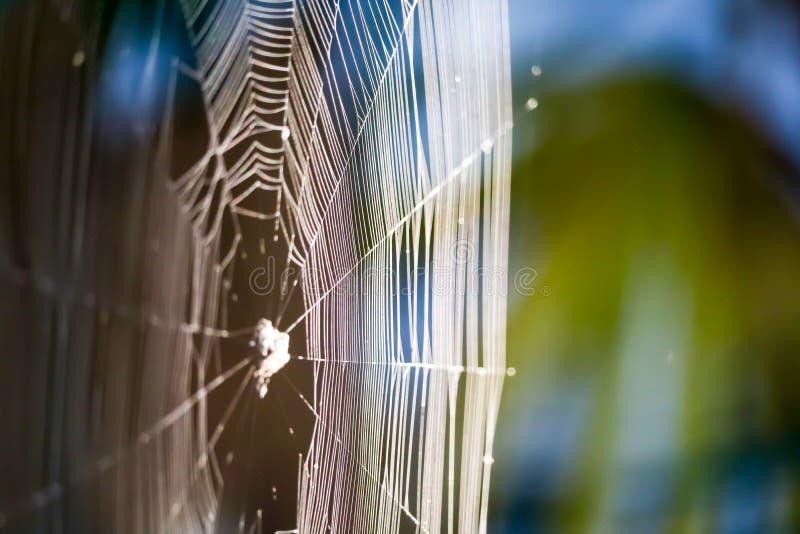 Unschärfe Spinnennetz, damit manipulieren Opfer auf Baum im Garten einschließen stockfotografie