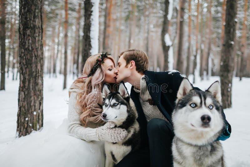 Unscharfe Jungvermählten küssen auf Hintergrund des sibirischen Huskys Braut und Bräutigam draußen gestaltungsarbeit lizenzfreie stockfotografie