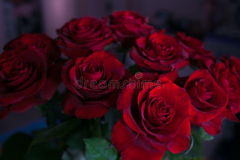 Unscharfe rote Rosen auf lokalisiertem Hintergrund lizenzfreie stockbilder
