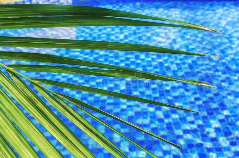 unscharfer abstrakter Sommerhintergrund, sonniger Tag im tropischen Klima, Palmblatt auf Hintergrund des Pools des blauen Wassers lizenzfreie stockfotografie
