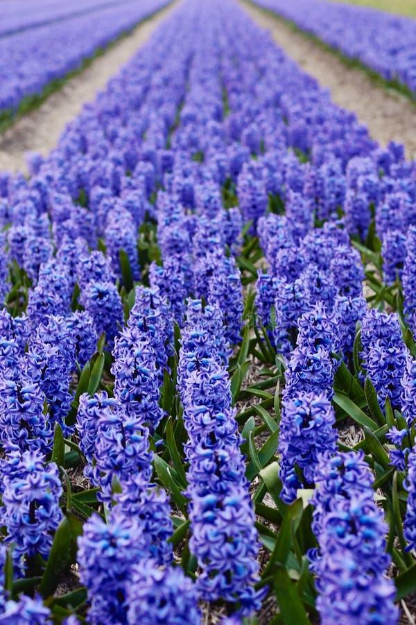 Unscharfer Blumenhintergrund stockfotografie