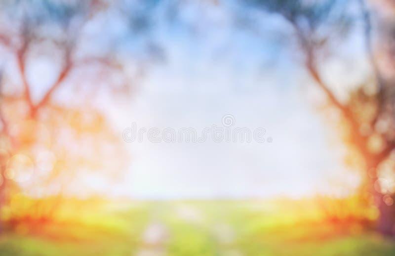 Unscharfer Frühlings- oder Herbstnaturhintergrund mit grünem sonnigem Feld und Baum auf blauem Himmel lizenzfreie stockfotografie
