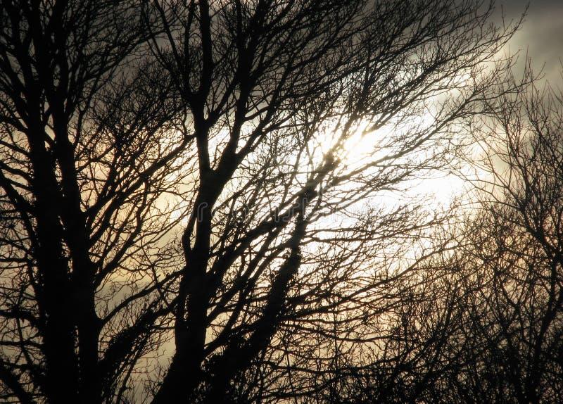 Unscharfer gespenstischer Hintergrund von silhouettierten Bäumen und von stürmischem Himmel lizenzfreie stockfotos