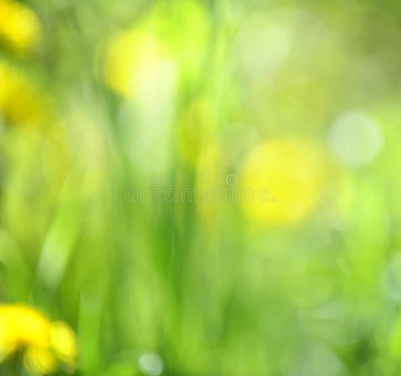 Unscharfer grüner Hintergrund lizenzfreie stockbilder