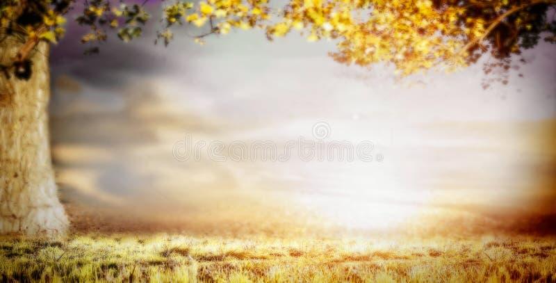 Unscharfer Naturhintergrund mit großem Baum, Gras und schönem Himmel, Fahne stockfotografie