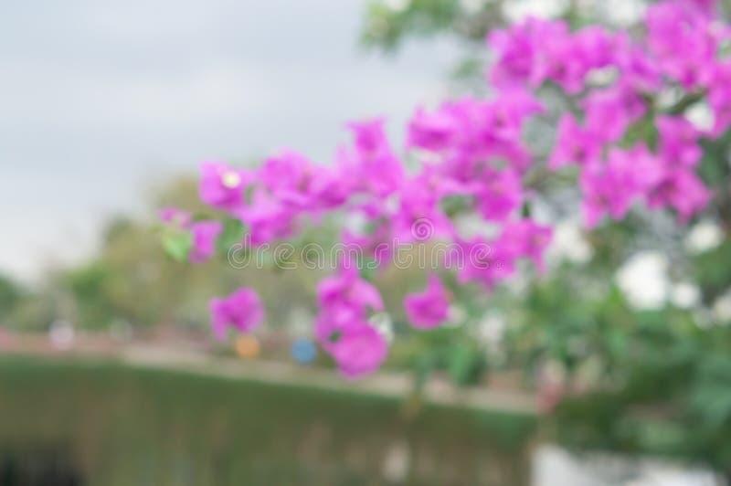 Unscharfer rosa Bouganvillablumenhintergrund stockfoto