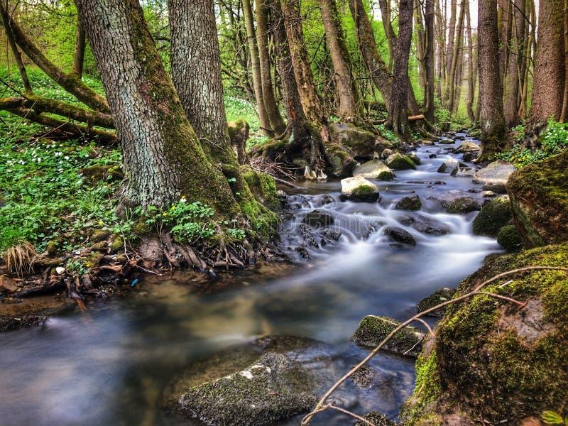 Unscharfer Strom im Wald stockbild