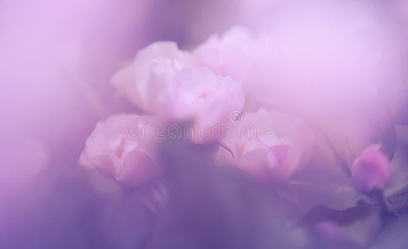 Unscharfer transparenter Blumenhintergrund Rosafarbene Rosen Vektorbild, Abbildung stockfotografie