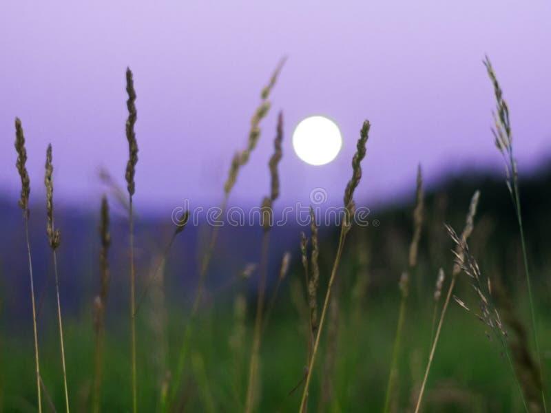 Unscharfer Vollmond, der über Altai-Berge, Kasachstan, gesehenes durch hohes grünes Gras auf Sommernacht steigt lizenzfreie stockfotos