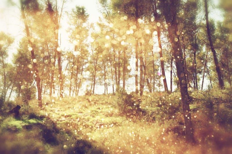 Unscharfes abstraktes Foto der Lichtexplosion unter Bäumen und Funkeln bokeh beleuchtet gefiltertes Bild und gemasert lizenzfreie stockfotos