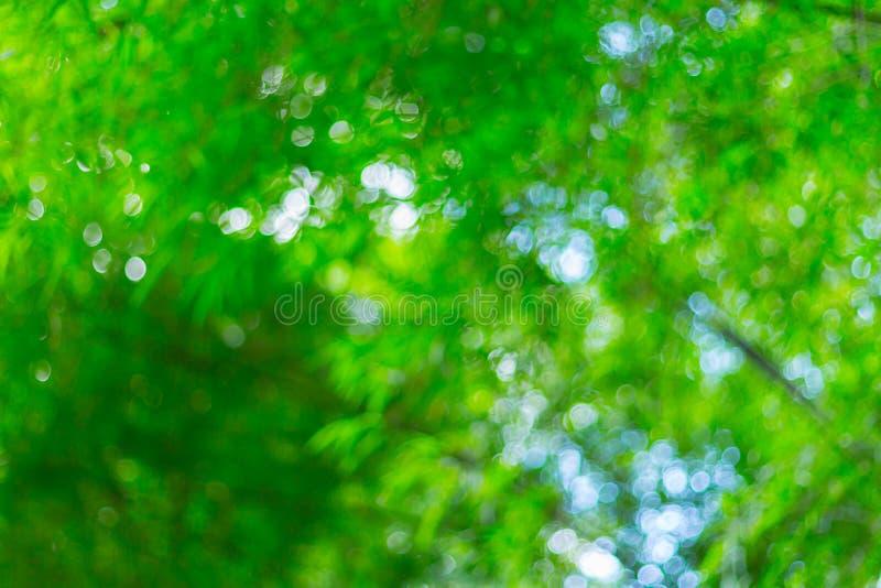 Unscharfes Bild des Bambuswaldes stockfoto