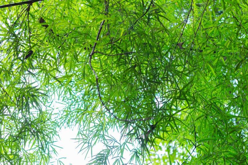 Unscharfes Bild des Bambuswaldes lizenzfreies stockfoto