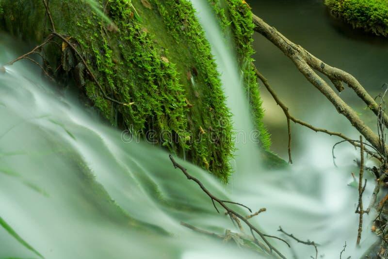Unscharfes Wasser, das zwischen Baumaste fließt lizenzfreies stockfoto