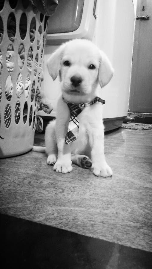 Unschuldiger Hund lizenzfreies stockfoto