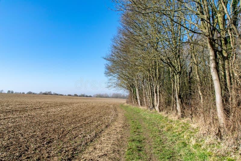 Unseasonally ciepła pogoda jak sezony zmienia od zimy skakać z nowym przyrostem zaczyna wyłaniać się na drzewach i jasnych niebie fotografia royalty free
