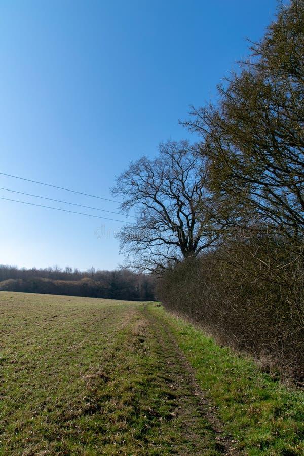 Unseasonally ciepła pogoda jak sezony zmienia od zimy skakać z nowym przyrostem zaczyna wyłaniać się na drzewach i jasnych niebie zdjęcia stock