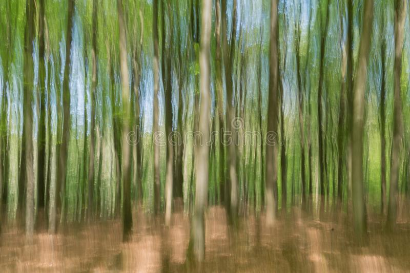 Unseen reality: Blurred view of young beech trees in spring stock image