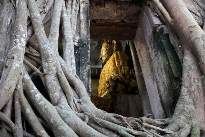 Unseen Thailand Wat Bang Kung, Buddhist Temple with the large tree at Amphawa.  royalty free stock photo