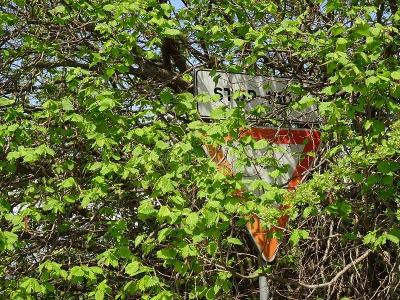 Unseen verkeerstekenhoogtepunt door de bladeren wordt behandeld dat royalty-vrije stock afbeelding