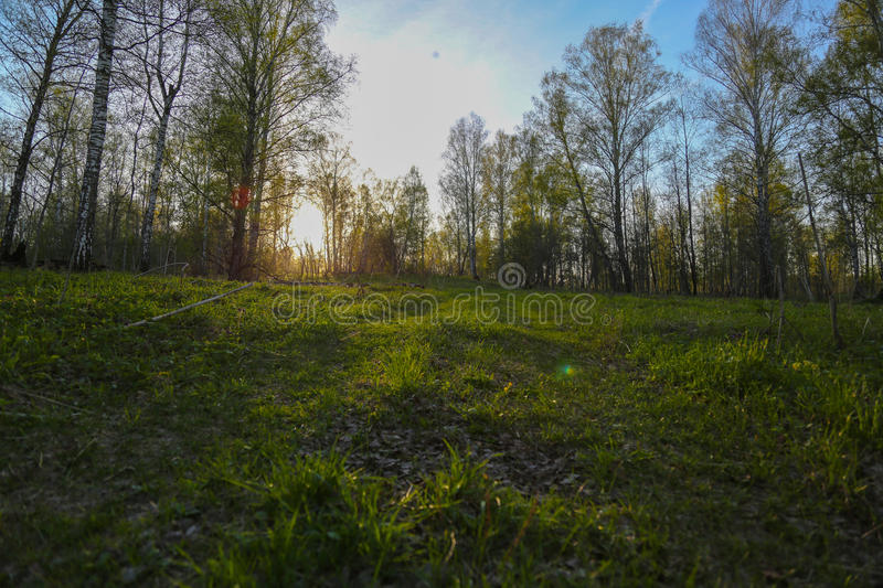 Unset in the forest stock photos