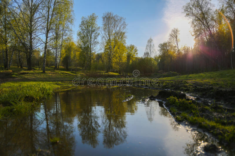 Unset in the forest royalty free stock image
