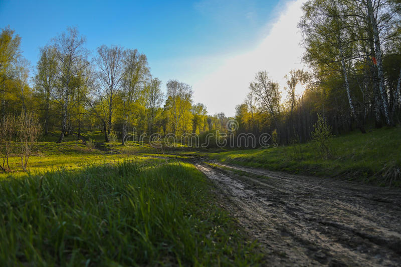 Unset in the forest stock photography