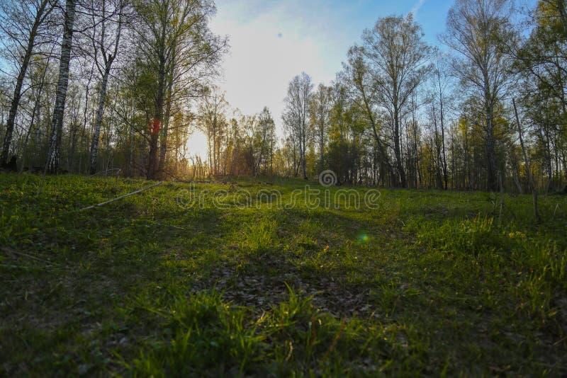 Unset in het bos stock foto's