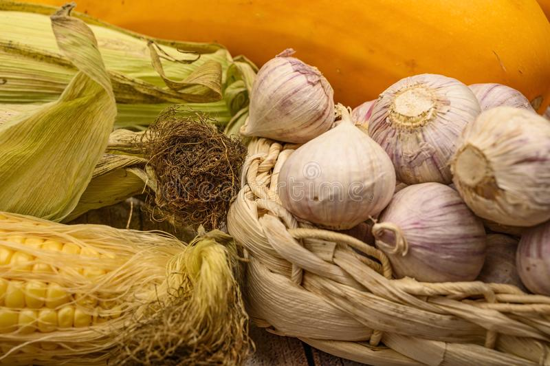 An unshelled ear of corn, young garlic in a wicker basket, marble pumpkins and yellow zucchini on the table. Autumn harvest. royalty free stock photography
