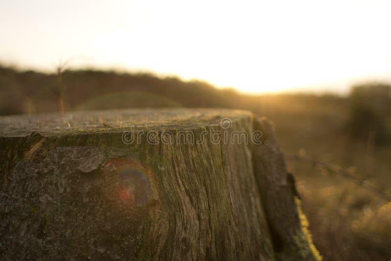 """unsplash a madeira de Brown do coto árvore do †de COM de """"cortou o alargamento da lente da elevação de Sun fotos de stock"""
