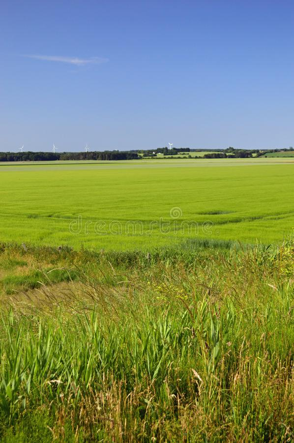 Free Unspoilt Countryside In North Zealand, Denmark Stock Photos - 123964823