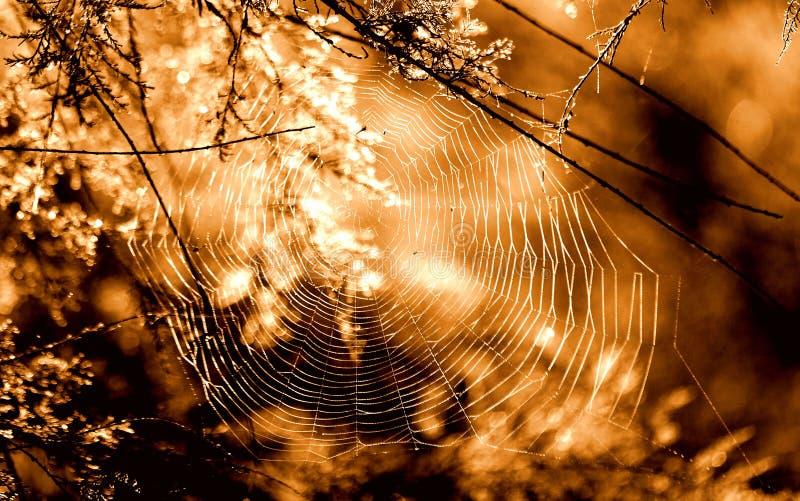 Unsteady pajęczyny kołysanie w jesień wiatrze zdjęcia stock