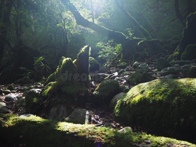 Unsui-Kyokloof van Yakushimashiratani royalty-vrije stock fotografie